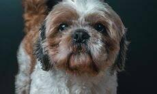 5 dicas para combater a ansiedade e o tédio do seu cão