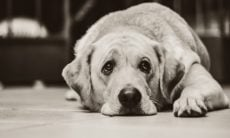 Deprimido pela morte da mulher, homem mata seus 3 cães e toca fogo em si mesmo