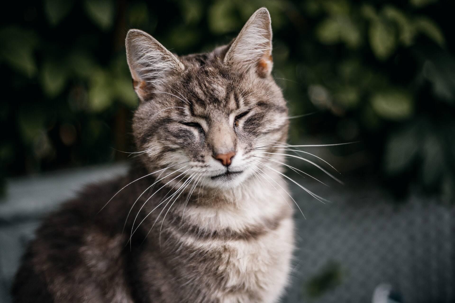 6 dicas para manter o seu gato sempre feliz e ronronando