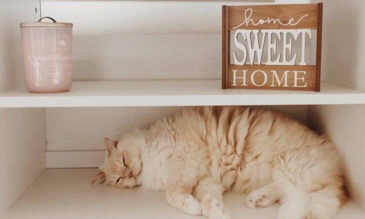 Por que os gatos adoram derrubar coisas das prateleiras? Pesquisadores explicam