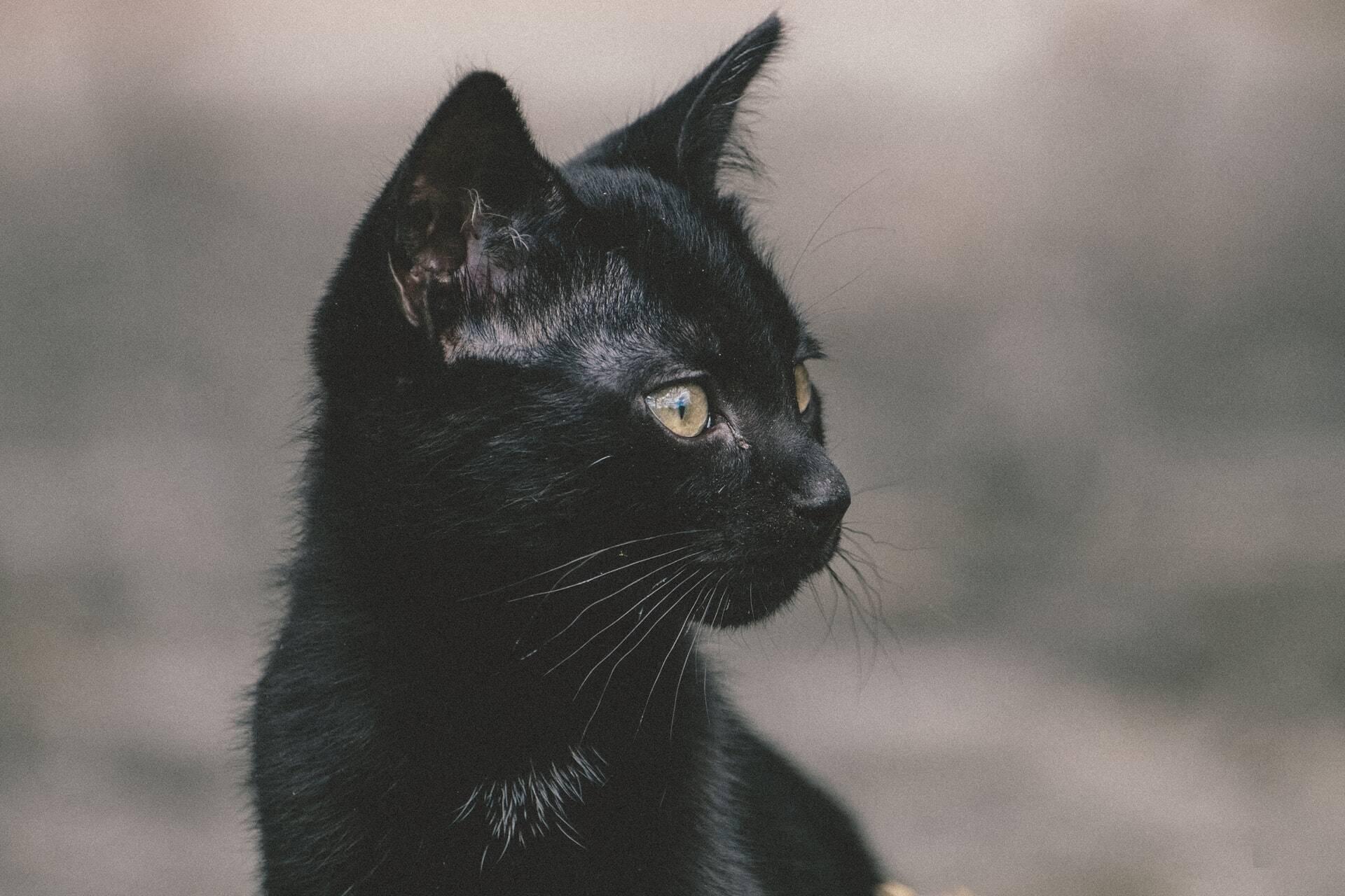 Após gato ser engolido por cobra python, comunidade alerta: mantenha os bichanos em casa