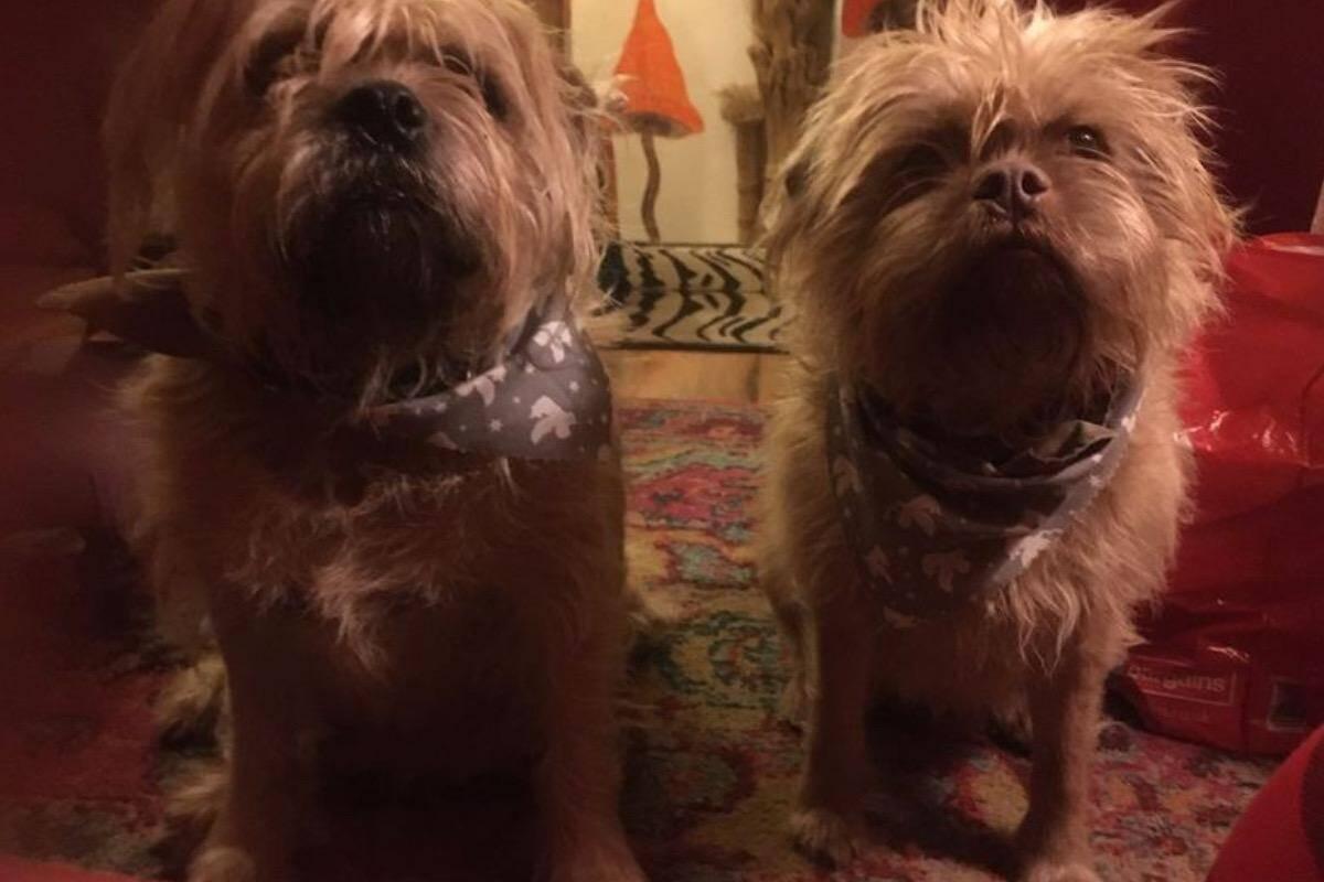 Cães com feições humanas e que 'falam' intrigam a internet
