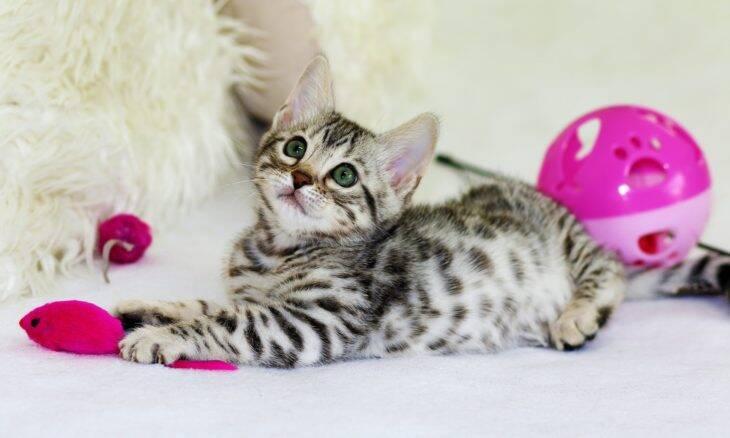 5 maneiras fáceis de manter o seu gato feliz dentro de casa
