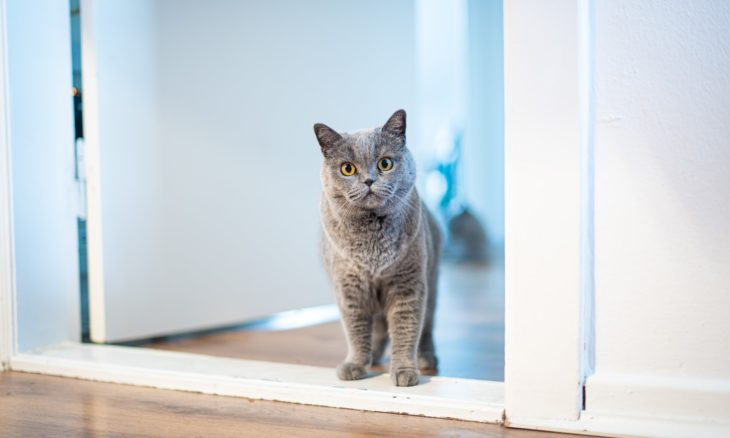 Gato detestam portas fechadas; veterinários explicam por quê