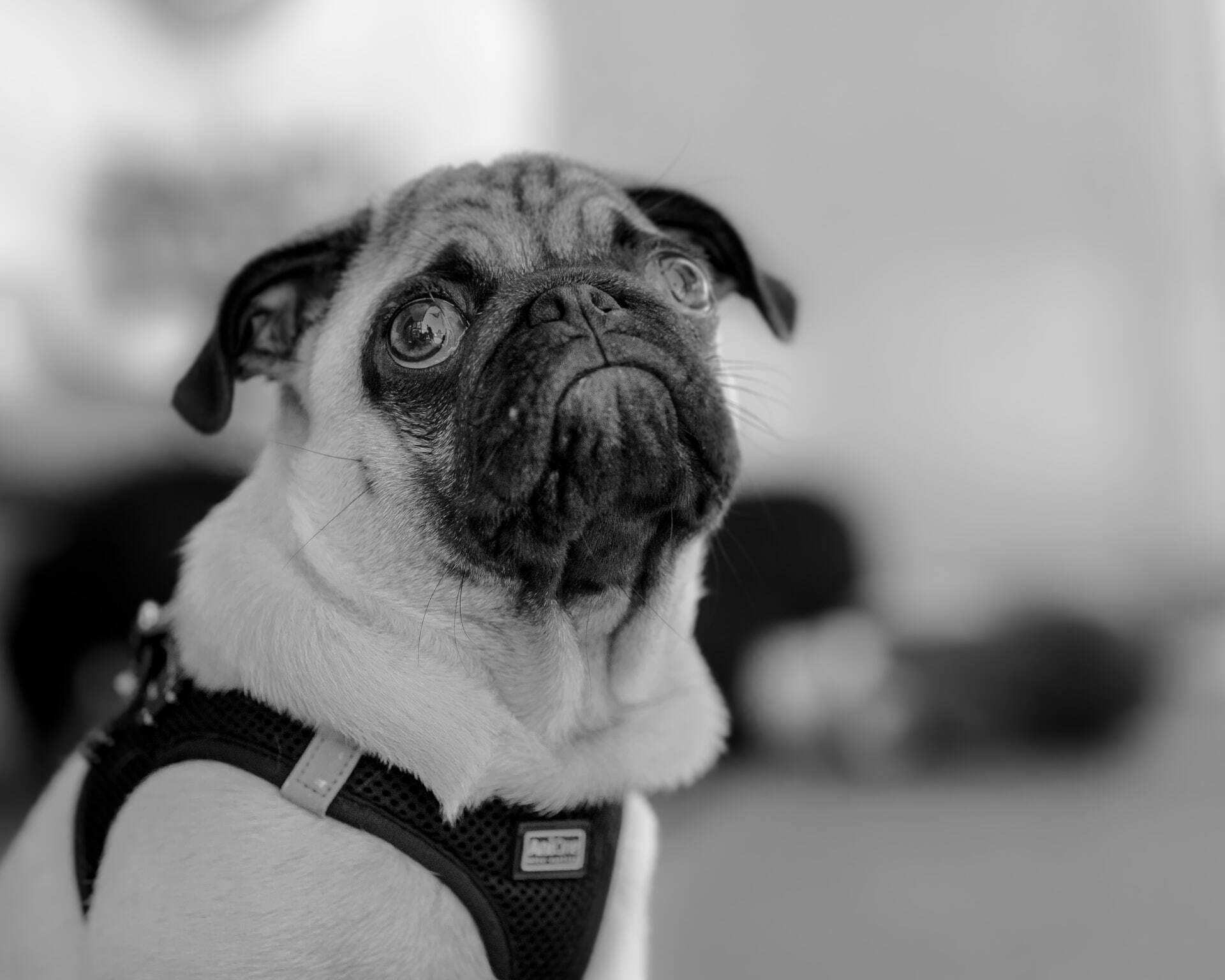Cães passeiam no parque, comem resto de maconha e vão parar no hospital