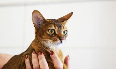 Quer ter um gato carinhoso? Aposte nessas 11 raças