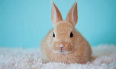 Pensa em adotar um coelhinho na Páscoa? Antes, conheça os cuidados