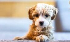 8 dicas para adotar um pet hoje e economizar uma fortuna com veterinários no futuro