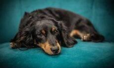 5 dicas infalíveis para que seu cão pare de destruir a casa e os móveis