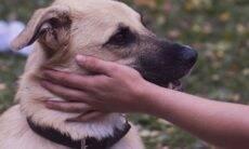 Cães eram muito amados na Grécia Antiga, comprovam arqueólogos