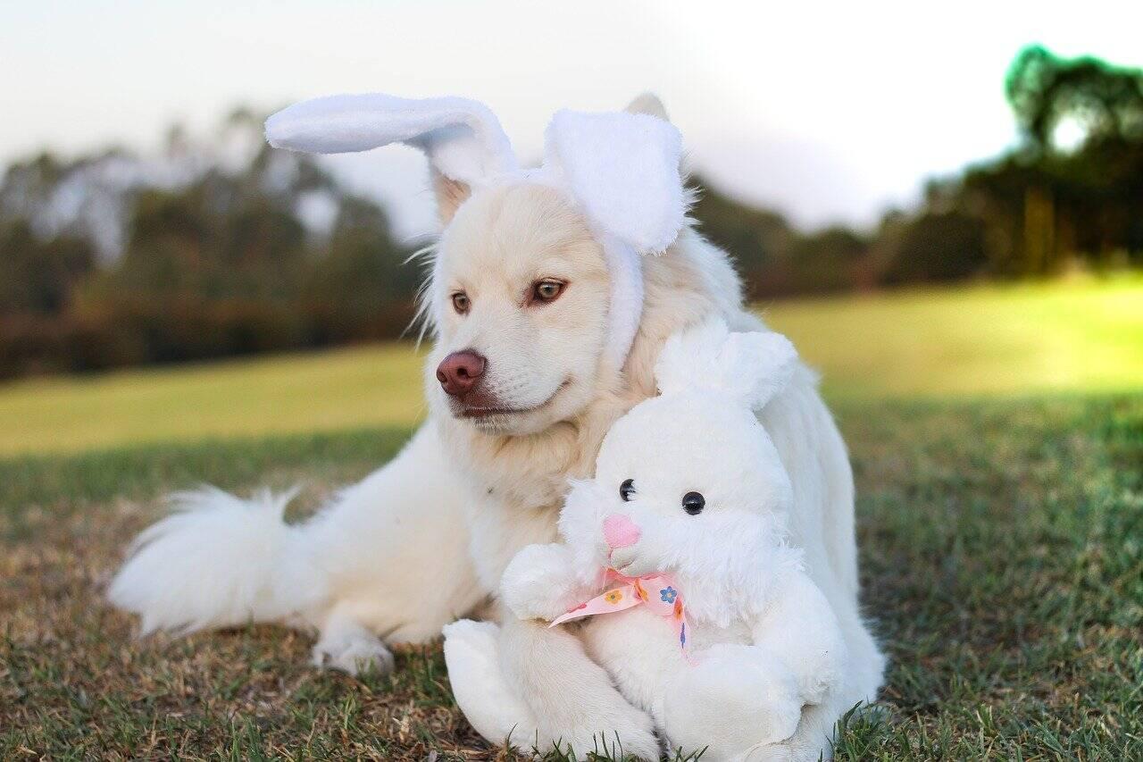 Rede de petshops vende ovos de Páscoa desenvolvidos para cães e gatos