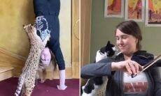 Vídeos de gatos pedindo atenção aos donos são a coisa mais fofa que você vai ver hoje