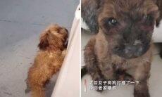 Vídeo: cão perdido por seis meses reconhece carro da dona em reencontro emocionante
