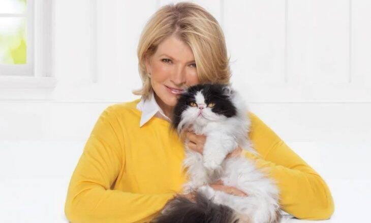 Tem gatos em casa? Confira 3 dicas de Martha Stewart para você
