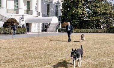 Após aulas de bons modos, cães de Joe Biden voltam para a Casa Branca