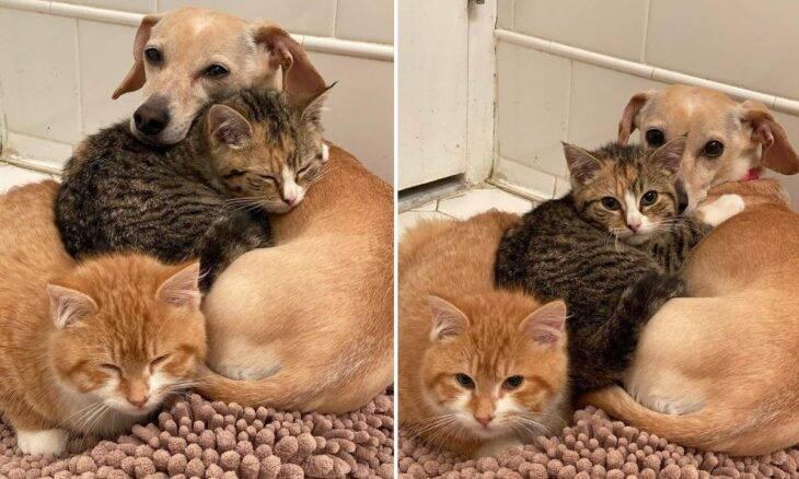 Fofura: Cadela ajuda dona a cuidar de filhotes de gato