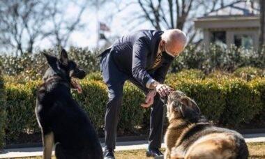 Cão de Joe Biden morde membro do governo e é expulso da Casa Branca