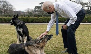 Cachorro de Joe Biden volta a se envolver em problemas com mordidas