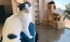 Dubai inaugura seu primeiro hotel de alto luxo para gatos