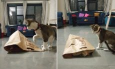 Vídeo: Esses gatos brincando de esconde-esconde em saco de papel vão alegrar seu dia