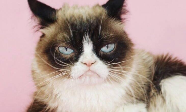 Conheça ou relembre os 10 gatos mais famosos da internet
