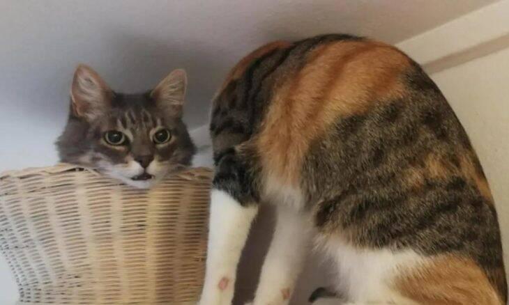 Ilusão de ótica assustadora deixa gato sem cabeça