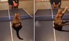 Vídeo: Conheça Quincy, um gato que é mestre no pingue-pongue