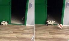 Vídeo hilário: Gato dá susto e quase mata cachorro do coração