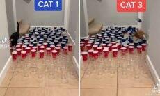 Vídeo: 3 gatos inteligentes superam desafiadora prova de obstáculos