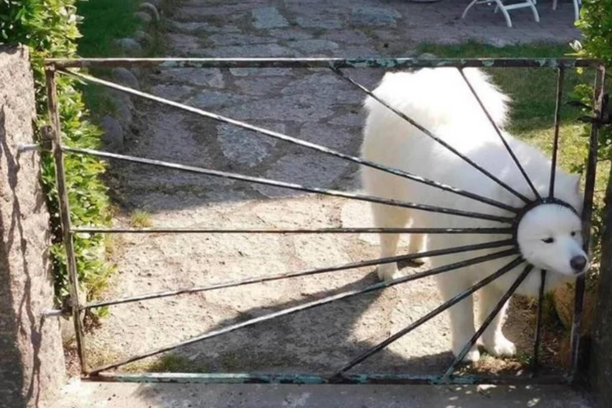 Os vídeos e fotos mais hilários sobre cães e gatos postados no Twitter na semana passada