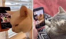 Gatos dançando assistindo vídeo viral quebram a internet