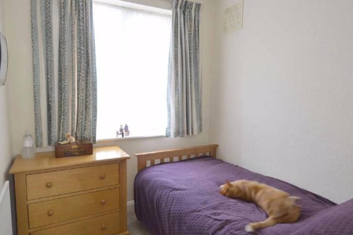 Graças a aplicativo de imóveis, dono encontra seu gato... na casa do vizinho