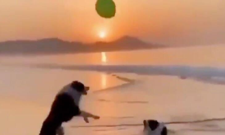 Vídeo: cães brincando com balão na praia é tudo o que você precisa pra começar bem a semana