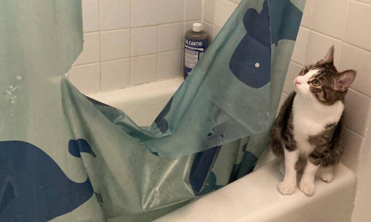 Os 18 vídeos e fotos mais hilários de cães e gatos na semana passada