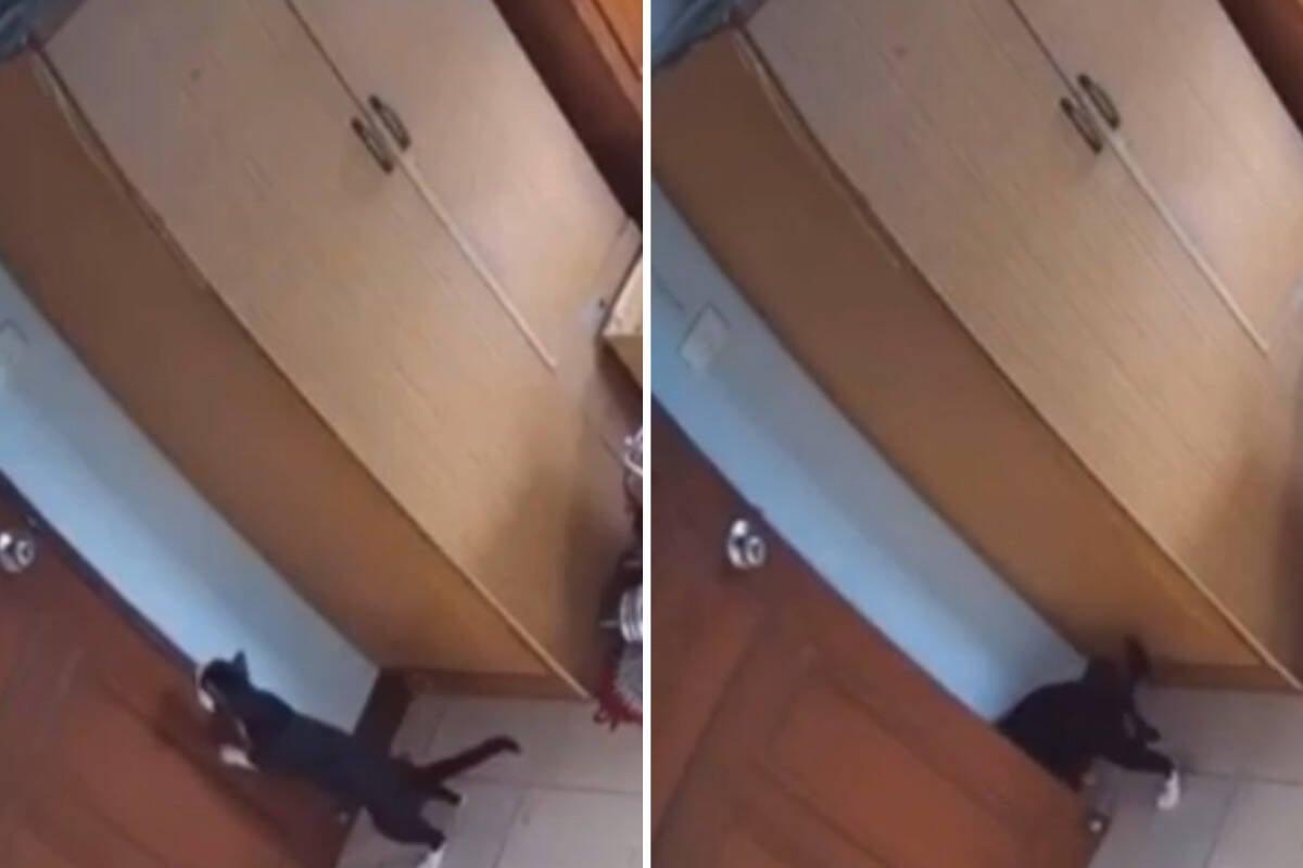 Vídeo: gato esperto consegue abrir porta e viraliza