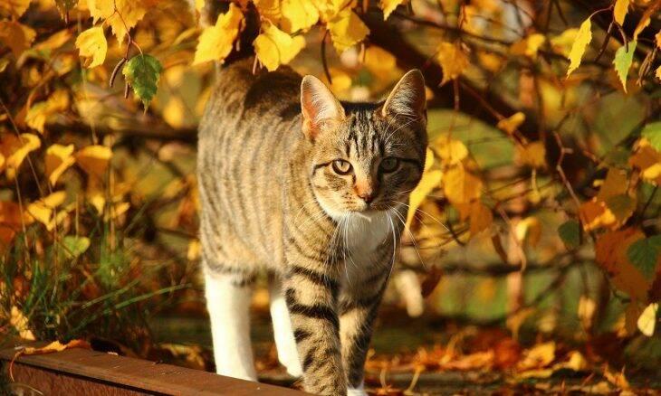 5 dicas para manter o seu pet saudável durante o outono
