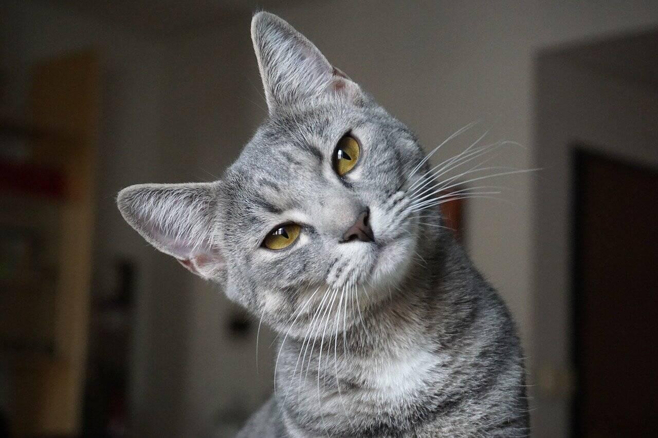 7 dicas para melhorar a vida de um gato em apartamento