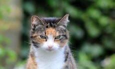 Conheça os 5 gatos que tiveram a vida mais longa na história