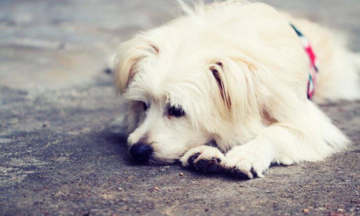 Paracetamol pode ser venenoso para cães e gatos, dizem veterinários