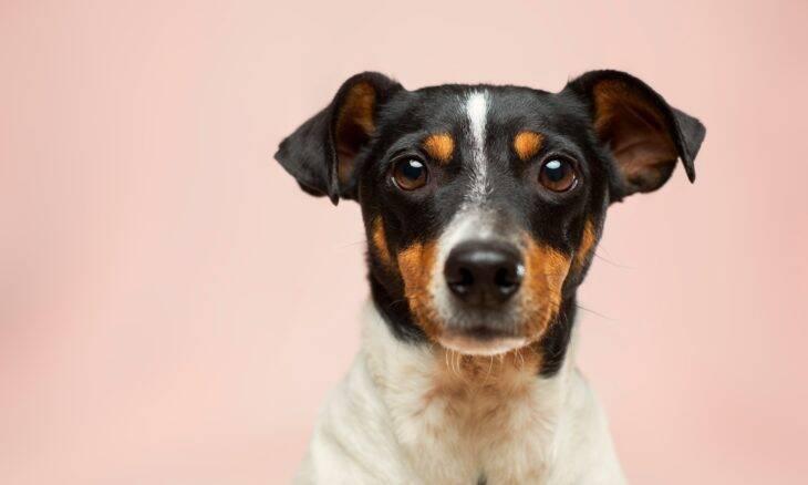 Por que os cães espirram? Saiba a resposta e o que fazer em caso de excesso