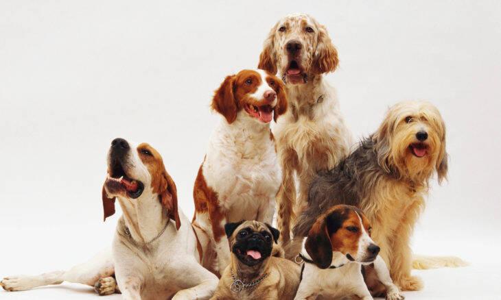 Confira as 10 raças de cães que ficaram mais populares (e caras) durante a pandemia no Reino Unido