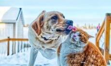 Cientistas calculam qual é o impacto ambiental de cães e gatos