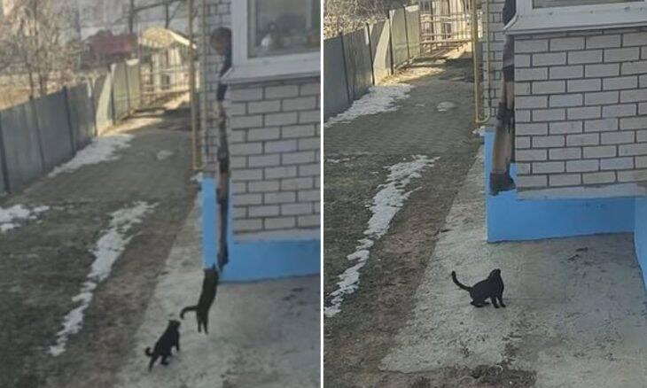 Vídeo: Gatos voltam para casa escalando cobertor estendido pelo dono
