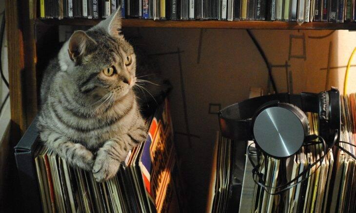 Os gatos têm um estilo musical preferido? Veja essa experiência de uma dona de dois deles