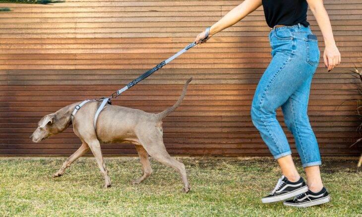 Veja os benefícios das coleiras do tipo peitoral para o bem-estar do seu cão