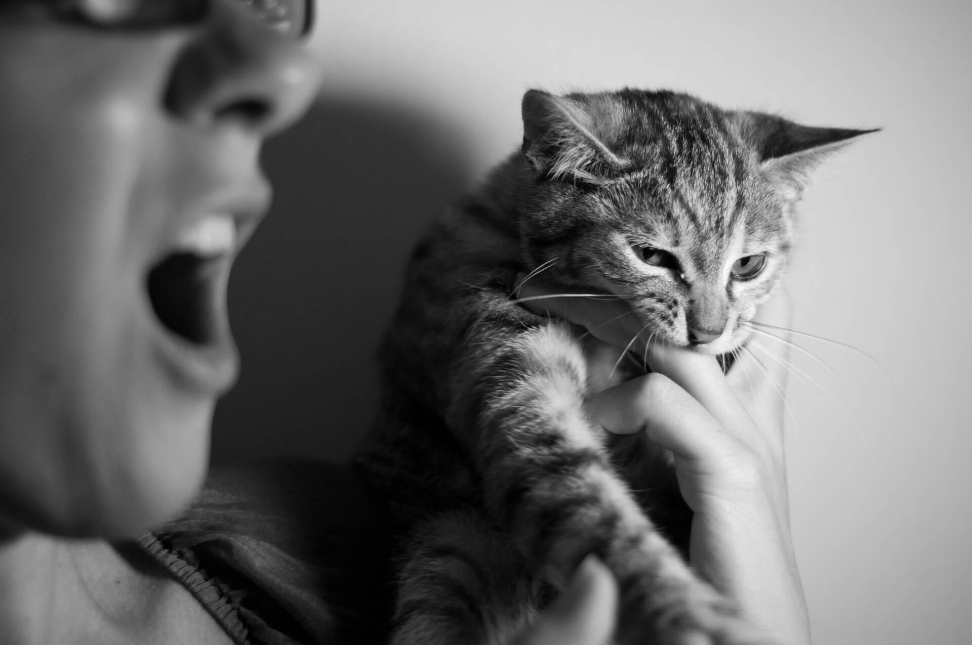 Por que meu gato me ataca quando vê outro felino do lado de fora de casa?