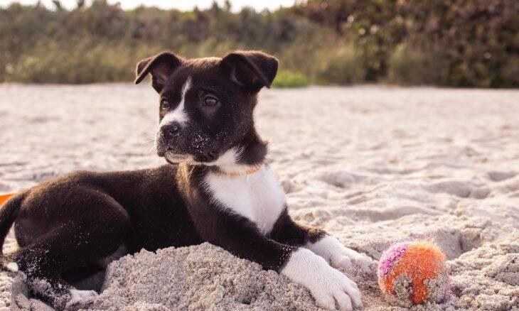 Projeto estuda formas de retardar envelhecimento dos cães, e você pode participar