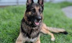 Após escapar de tentativa de afogamento pela própria dona, cadela ganha nova casa e família