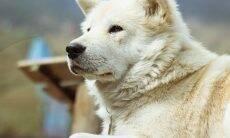 Tudo o que você precisa saber sobre perda cognitiva em cães idosos