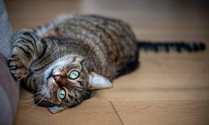 Tudo o que você precisa saber sobre o hábito de arranhar dos gatos